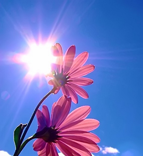Sun-and-flowers